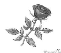 Фотография розу со стеблем