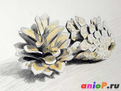 Рисуем сосновые шишки цветными карандашами