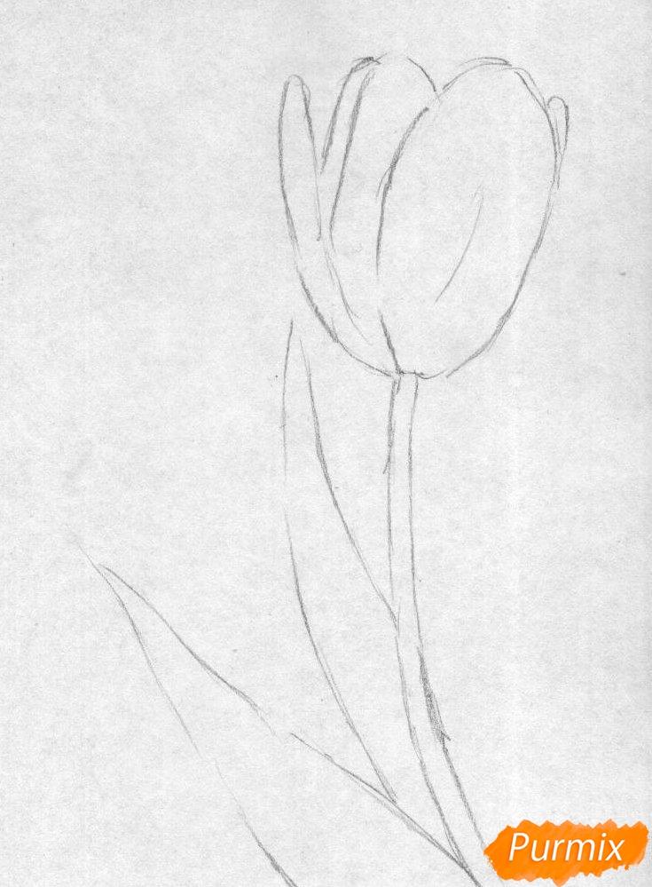 Рисуем тюльпан карандаши - шаг 1