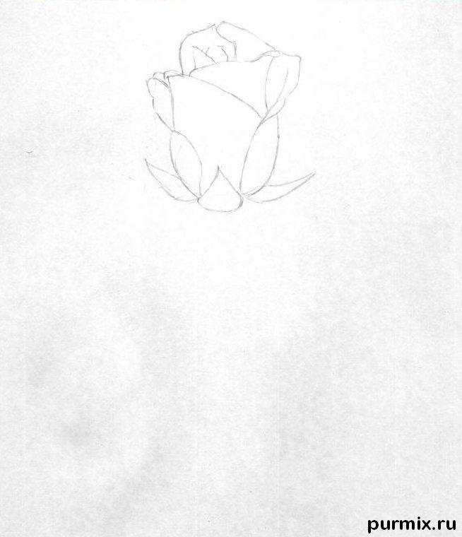 Рисуем красивую розу с длинным стеблем - фото 1