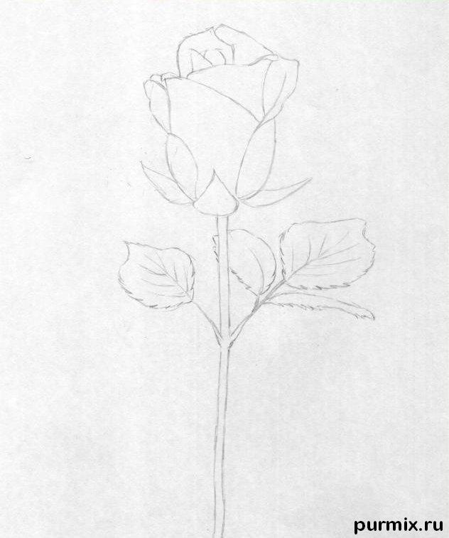 Рисуем красивую розу с длинным стеблем - фото 2