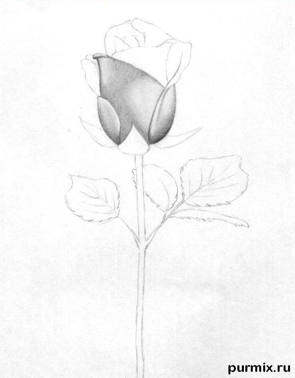 Рисуем красивую розу с длинным стеблем - фото 3
