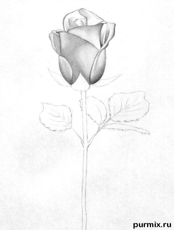 Рисуем красивую розу с длинным стеблем - фото 4