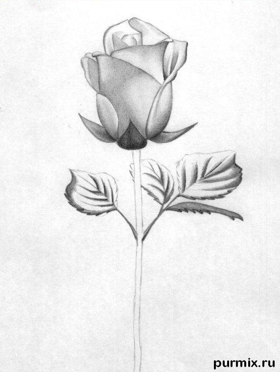 Рисуем красивую розу с длинным стеблем - фото 5