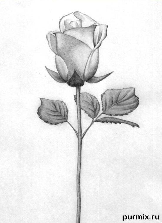 Рисуем красивую розу с длинным стеблем - фото 6