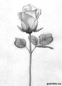 Как научиться рисовать розу простым карандашом