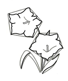 Рисуем цветок Горечавка