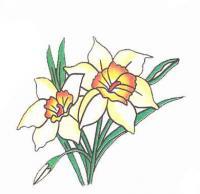 Как просто нарисовать цветок нарцисс карандашом