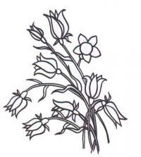 Как просто нарисовать цветы колокольчики карандашом