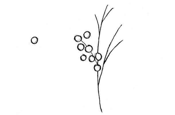 Как просто нарисовать веточку мимозы
