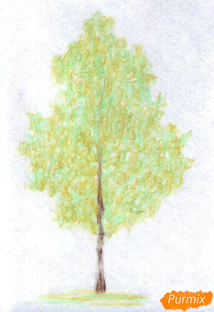 Рисуем березу цветными карандашами - шаг 2
