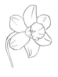 Как рисовать Нарцисс поэтапно