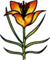 Рисуем лилию ребенку - шаг 4