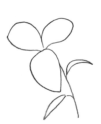 Рисуем лилию  или черной ручкой - шаг 1