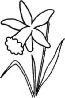 Как рисовать Нарциссы - шаг 3