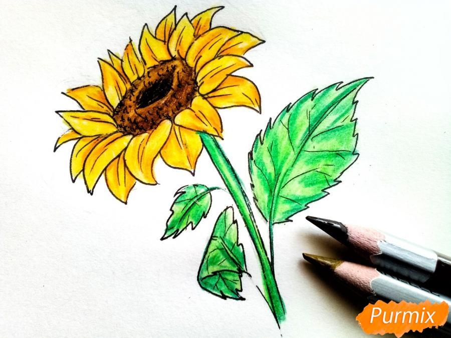Рисуем подсолнух цветными карандашами - фото 8