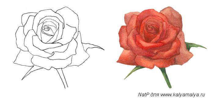 Рисуем розу для детей - фото 4
