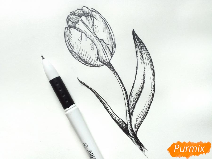 Учимся рисовать тюльпан ручкой - фото 8