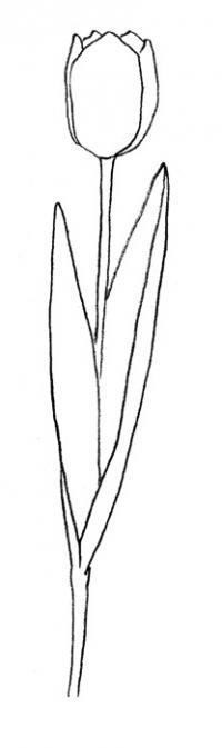 Учимся рисовать тюльпан