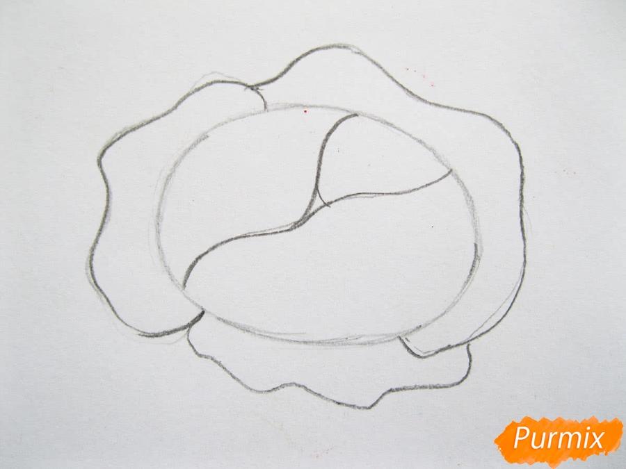 Как легко нарисовать кочан капусты цветными карандашами - фото 4