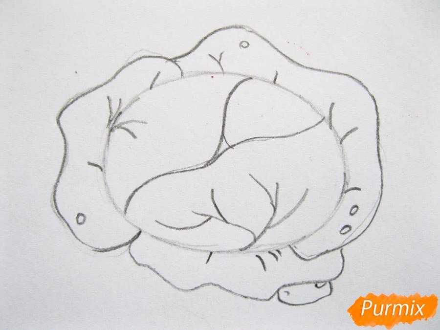 Как легко нарисовать кочан капусты цветными карандашами - фото 5
