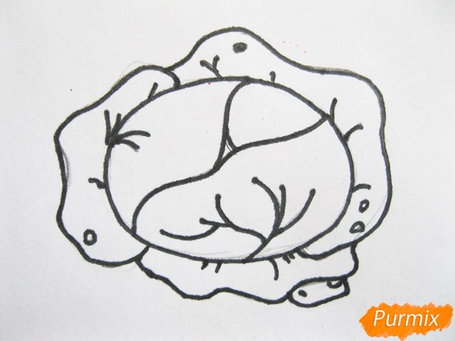 Как легко нарисовать кочан капусты цветными карандашами - фото 6