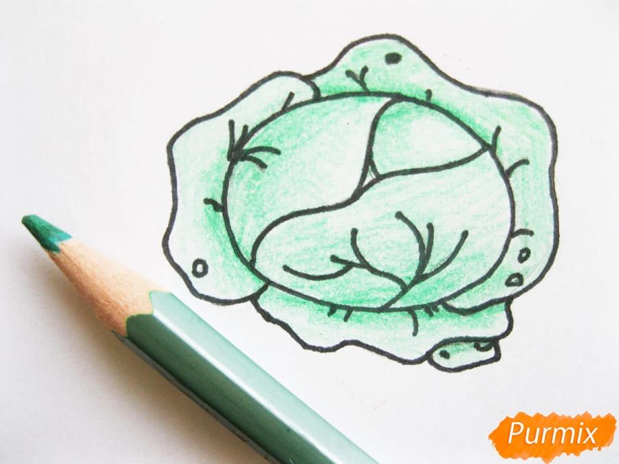 Как легко нарисовать кочан капусты цветными карандашами - фото 7