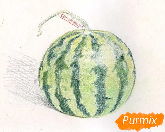 Рисуем целый арбуз цветными карандашами - фото 7