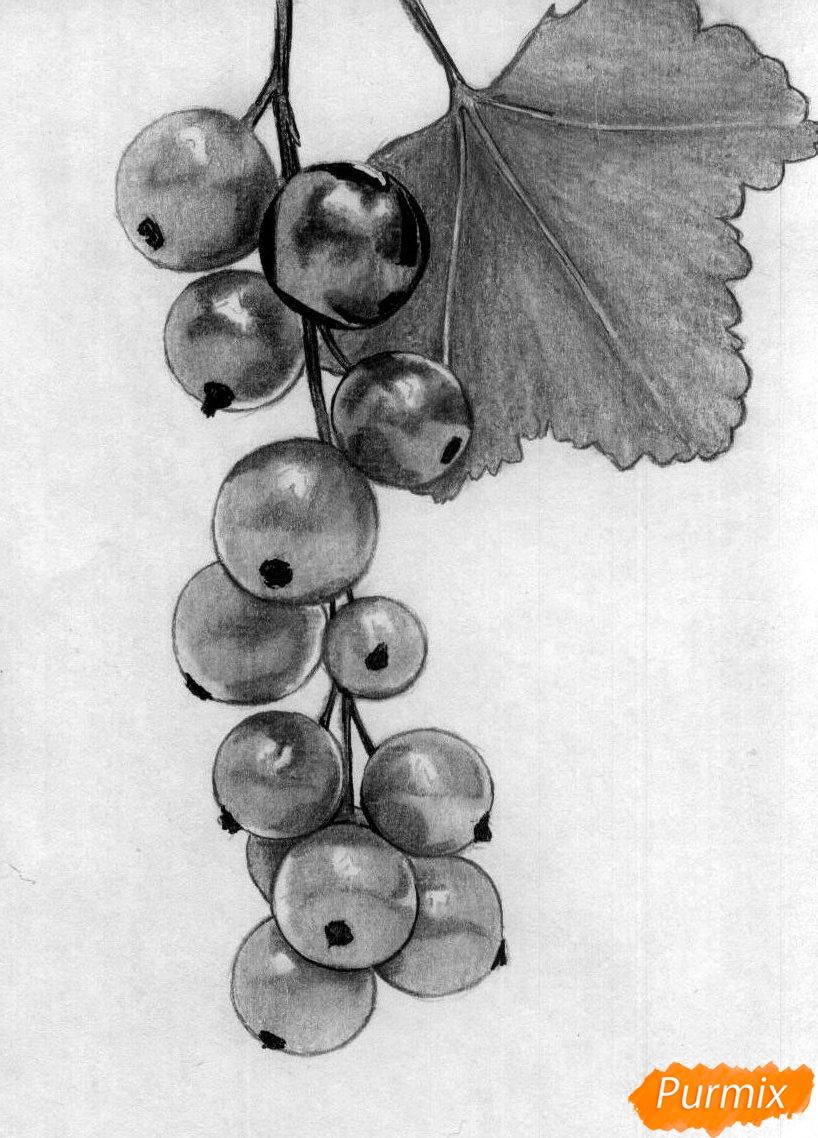 Как нарисовать гроздь смородины карандашами поэтапно