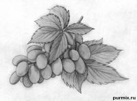 кисть винограда простым карандашом