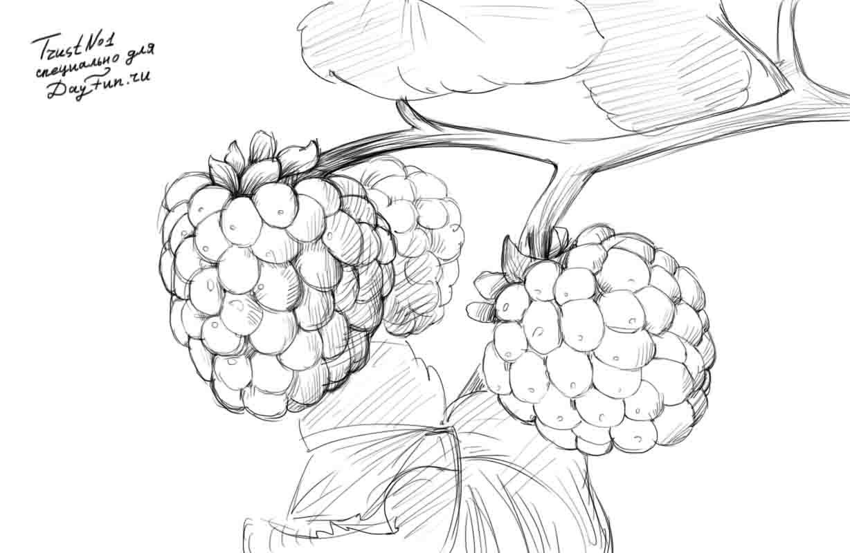 Рисуем веточку малины - шаг 4