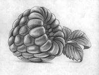 Рисунок малину простыми