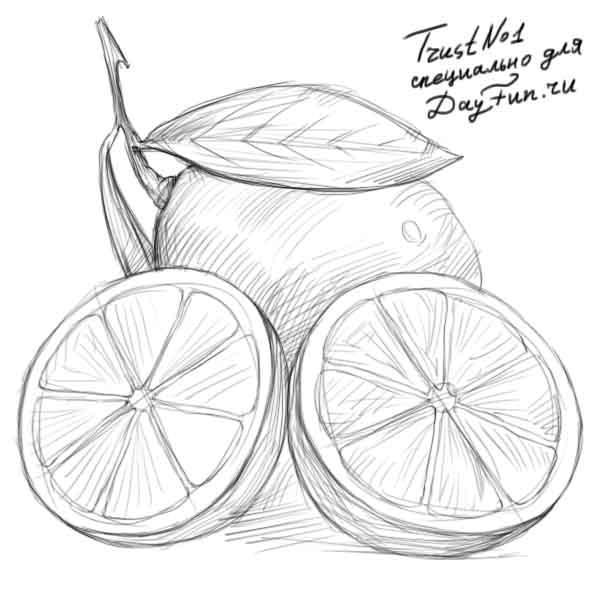 Рисуем разрезанный лимон - фото 4