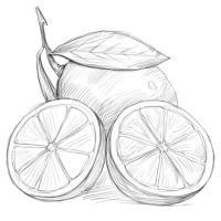 разрезанный лимон карандашом
