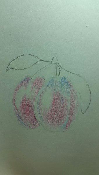 Рисуем сливу цветными карандашами