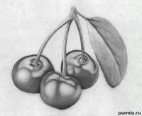 Как научиться рисовать вишню простым карандашом