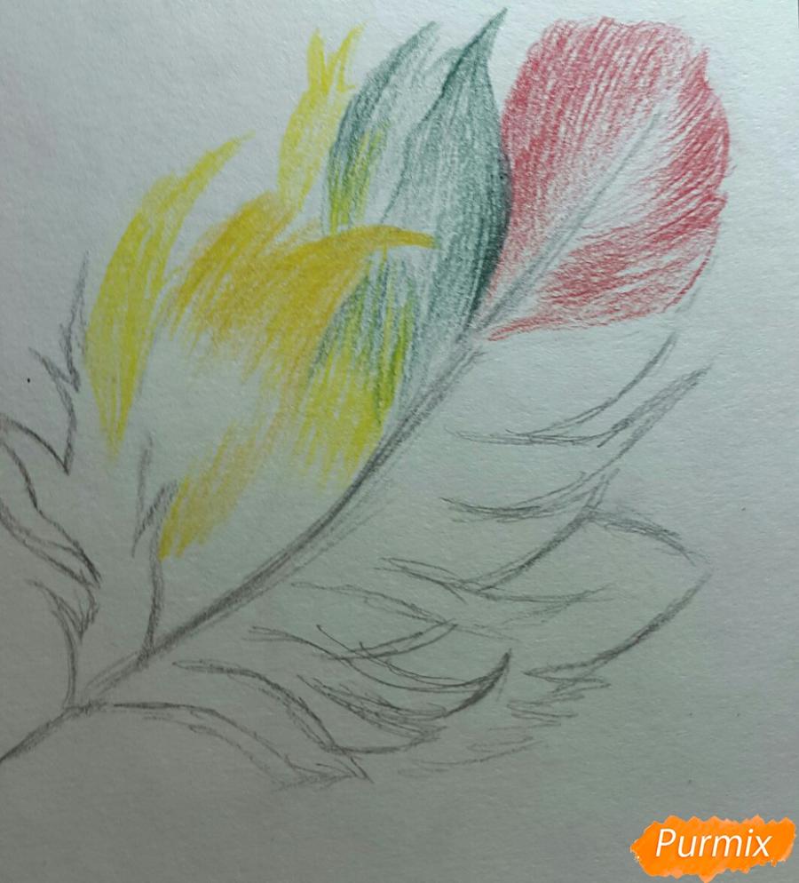 Рисуем перо цветными карандашами - шаг 2