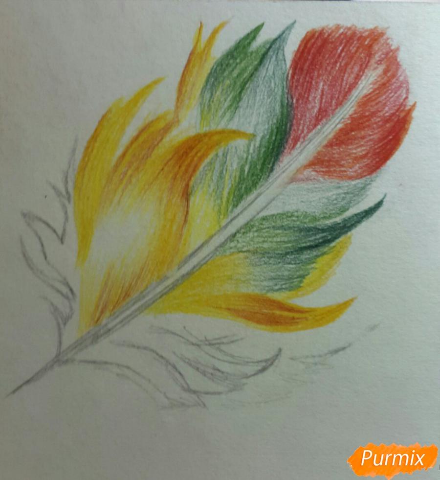 Рисуем перо цветными карандашами - шаг 4