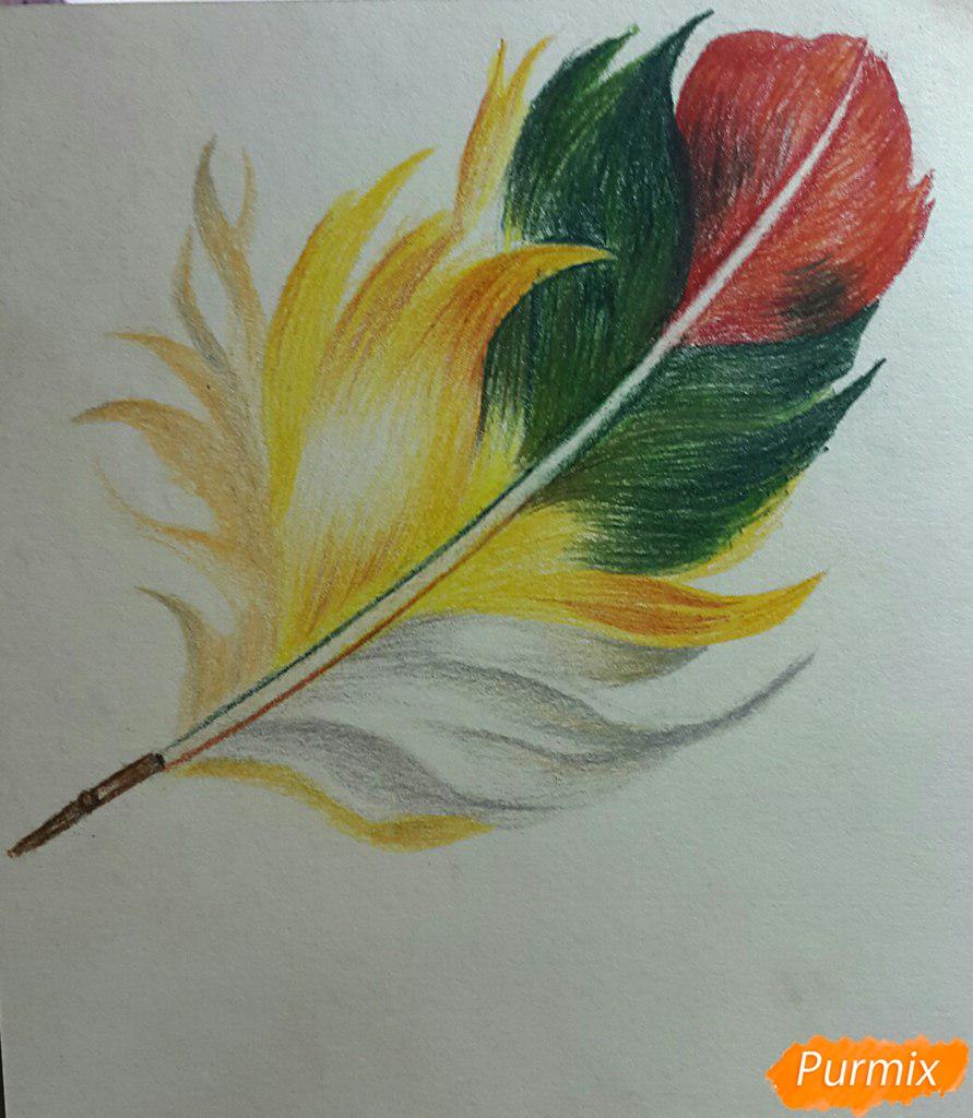Рисуем перо цветными карандашами - шаг 6