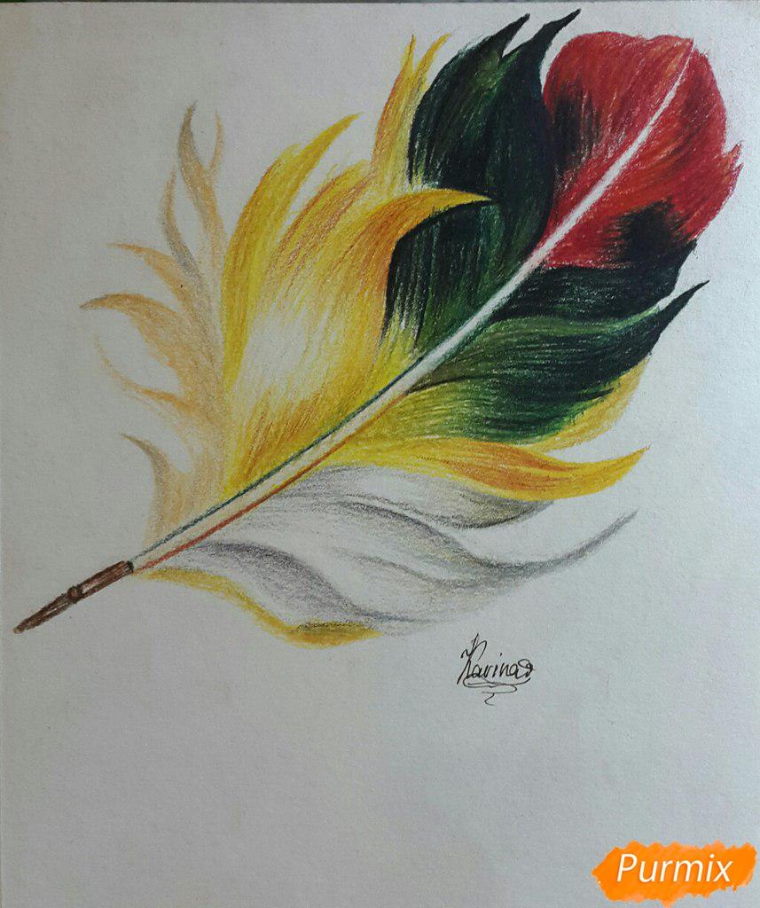 Как нарисовать перо цветными карандашами поэтапно