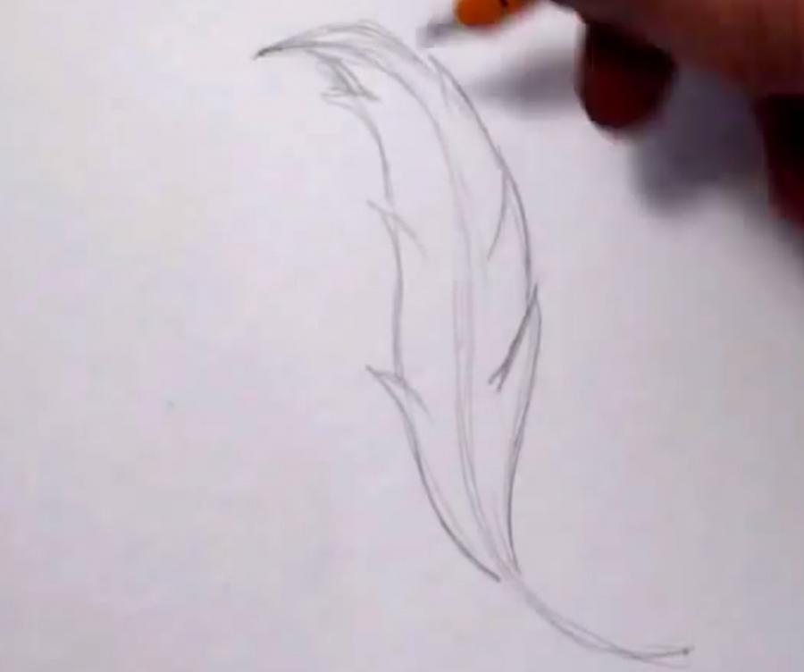 Как красиво нарисовать перо  на бумаге - шаг 2