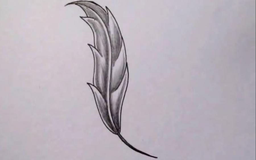 Как красиво нарисовать перо  на бумаге - шаг 6