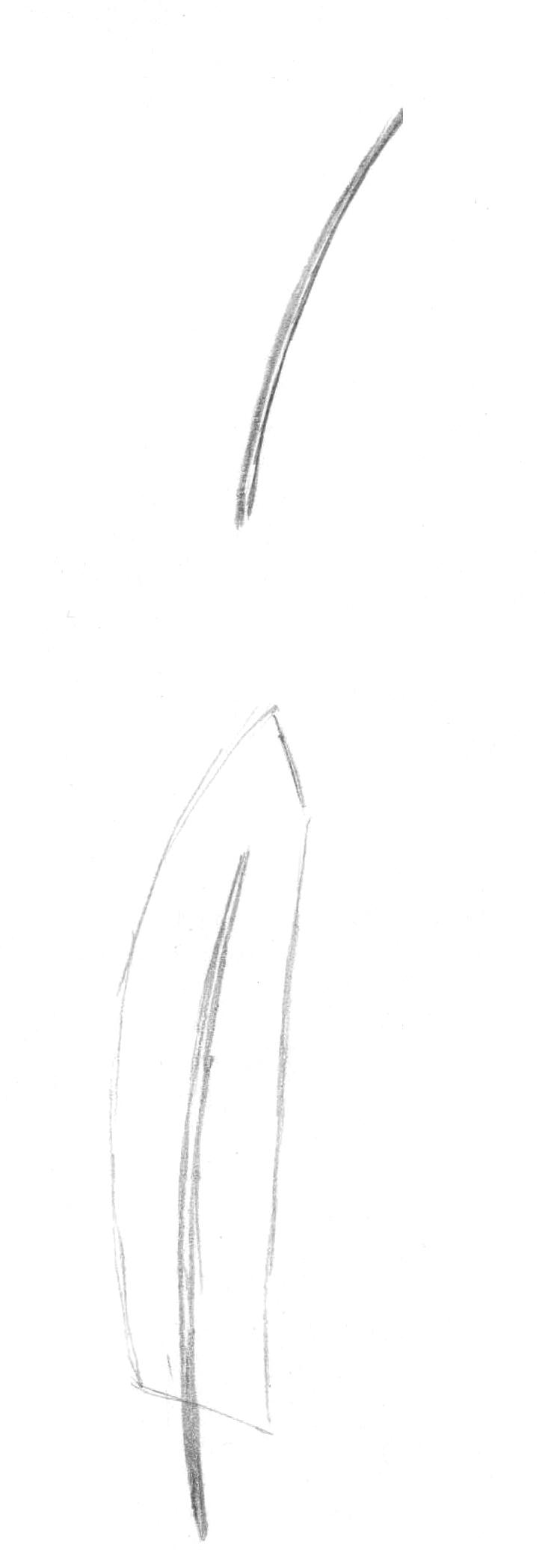 Рисуем перья карандашом - шаг 2
