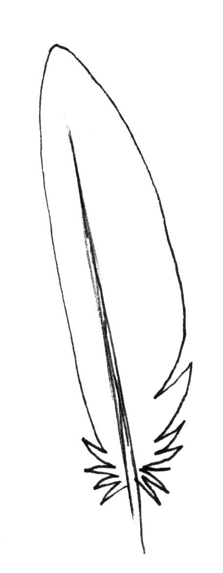 Рисуем перья карандашом - шаг 3