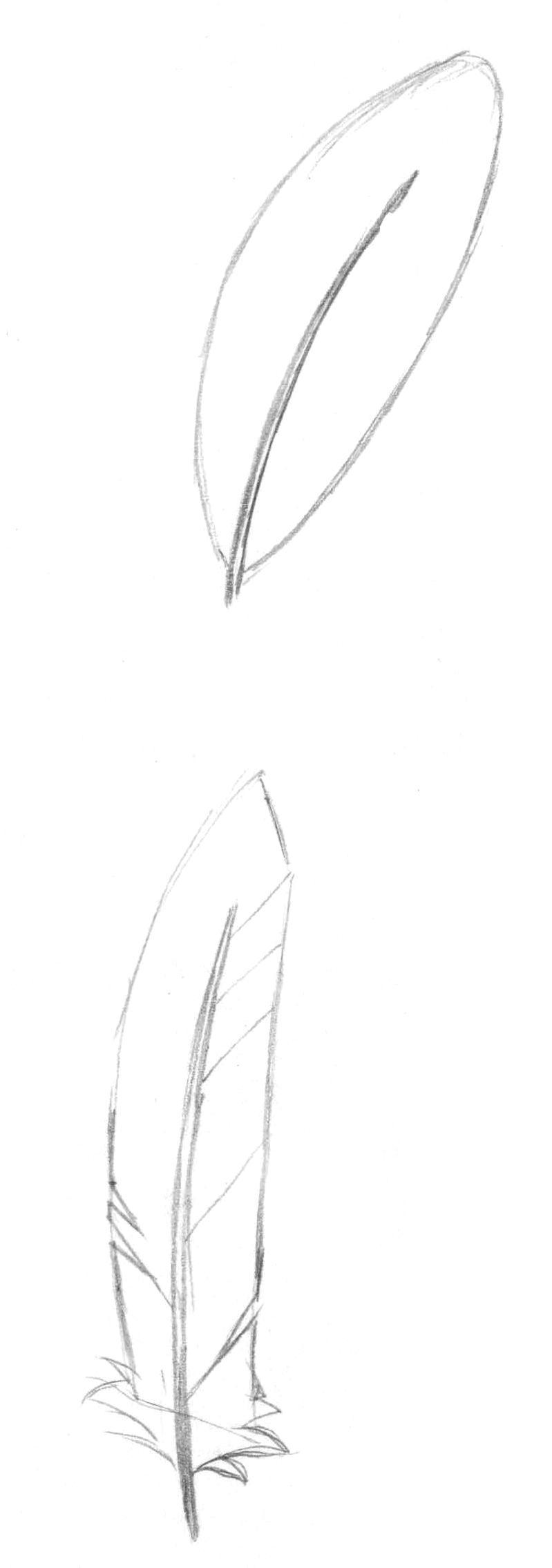 Рисуем перья карандашом - шаг 4