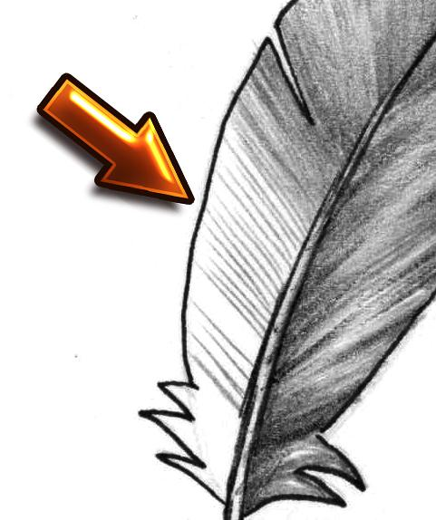 Рисуем перья карандашом - шаг 6