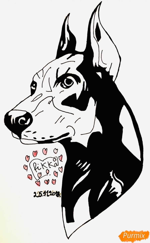 Как нарисовать собаку породы доберман в стиле тату поэтапно