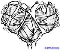 сердце из мышечной ткани карандашом