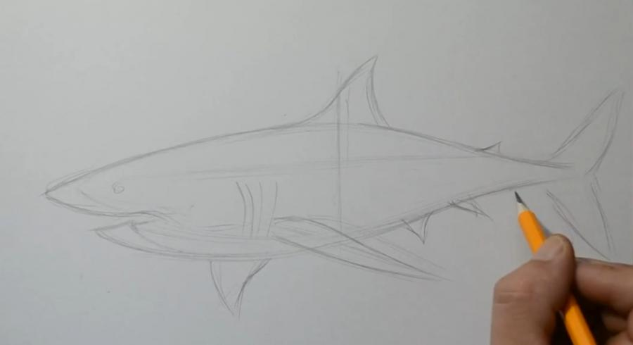 Рисуем татуировку акулы