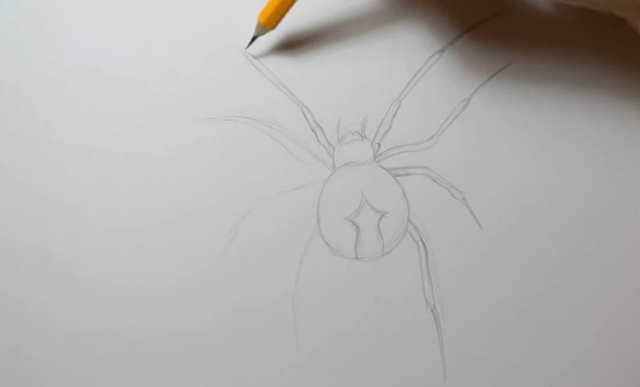 Как нарисовать татуировку паука карандашом поэтапно